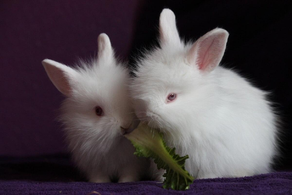 Chili verbiedt dierproeven voor cosmetica