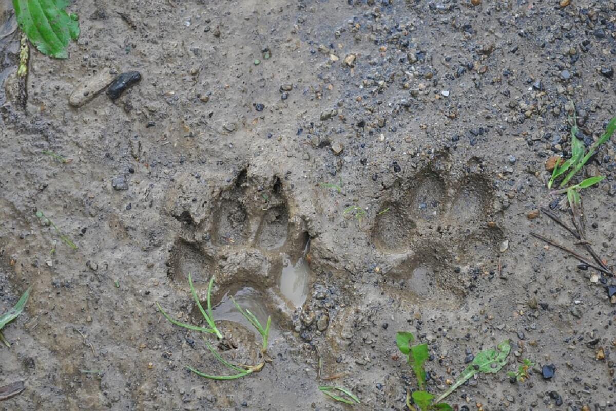 Wolf Amersfoort dood door schuld?