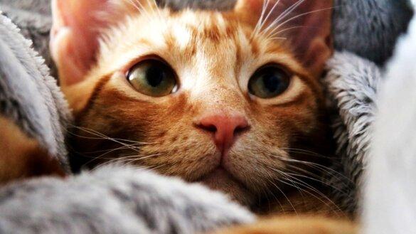 Is jouw kat een hufter of gewoon 'normaal'?