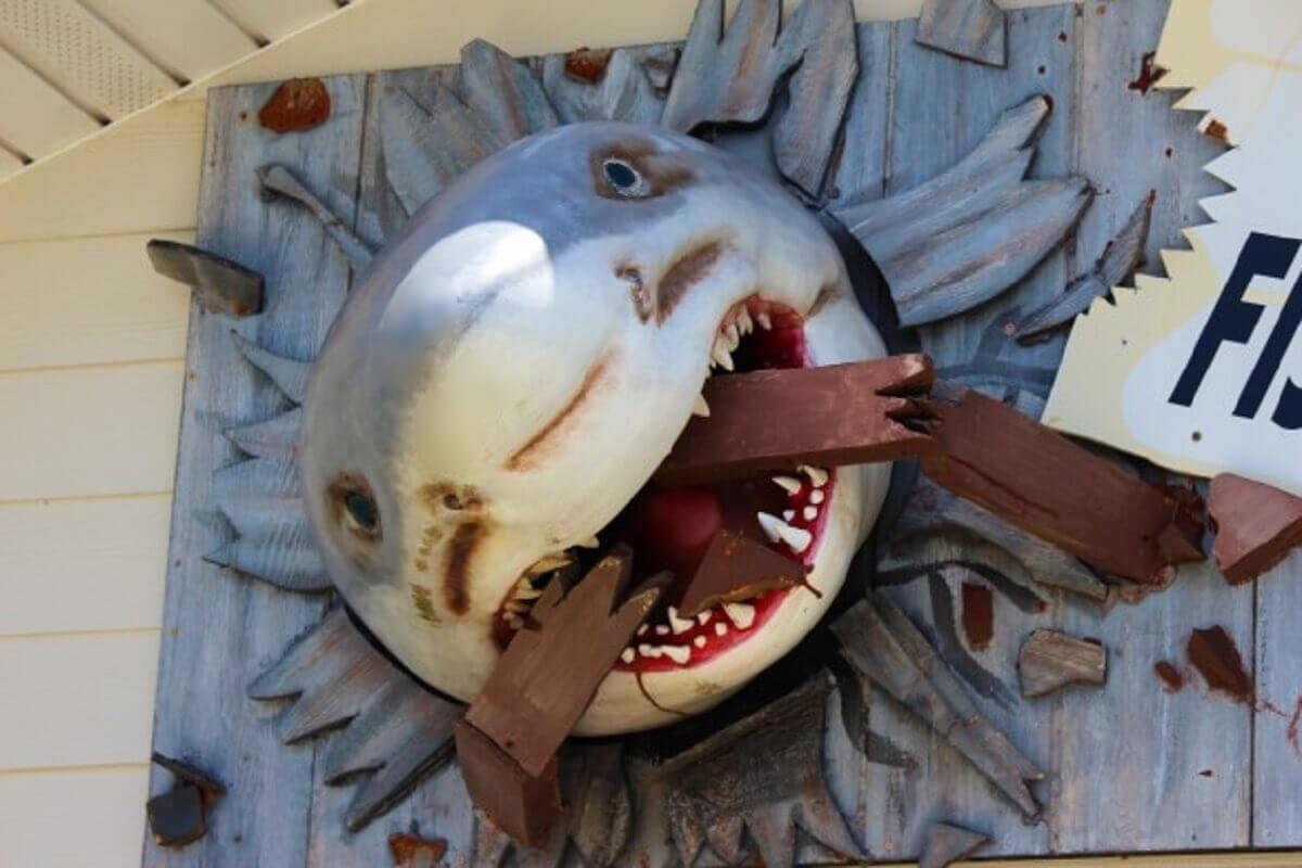 Waarom we haaien onterecht eng vinden