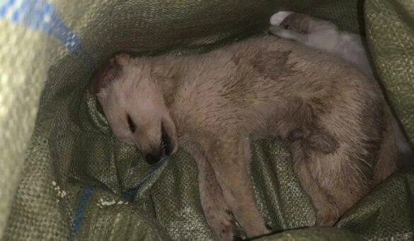 100 puppy's en kittens gedumpt door China's blind box-gekte