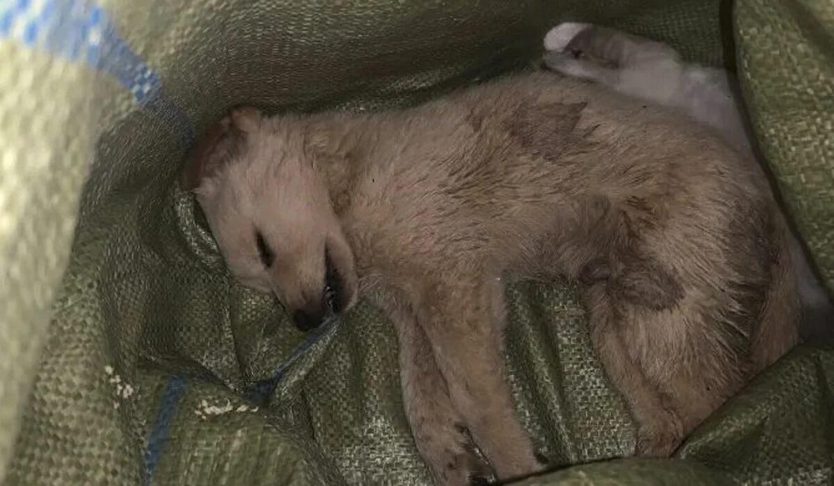 100 puppy's en kittens gedumpt in China's blind box-gekte