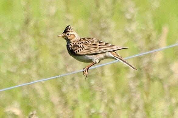 Biodiversiteit in Nederland neemt in zorgwekkend tempo af