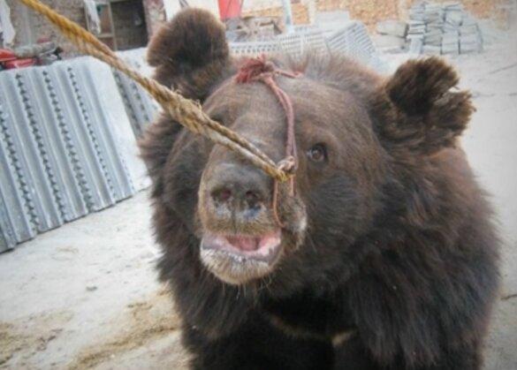 Punjab verbiedt gevechten honden met wilde dieren