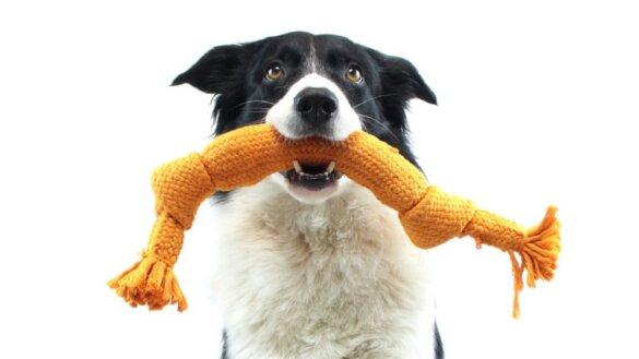 Superslimme honden kunnen namen tientallen speeltjes leren