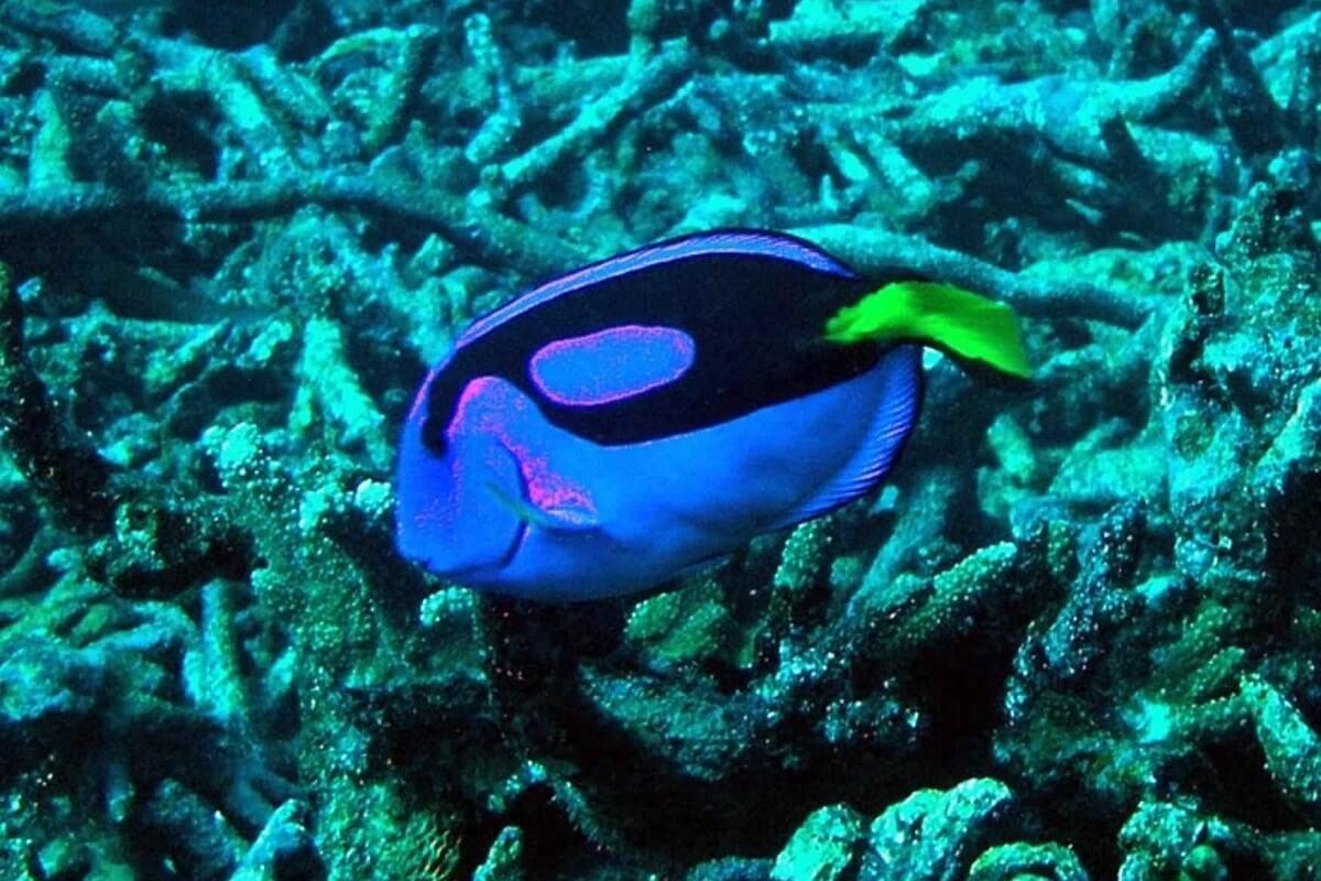 Koralen in tien jaar wereldwijd met 14 procent afgenomen