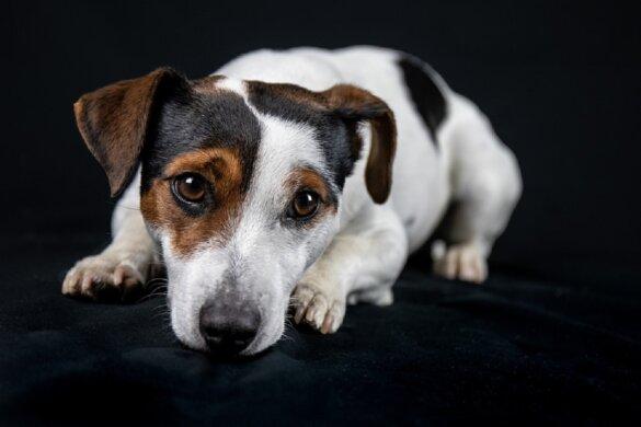Steekpartij is ook de hond fataal geworden