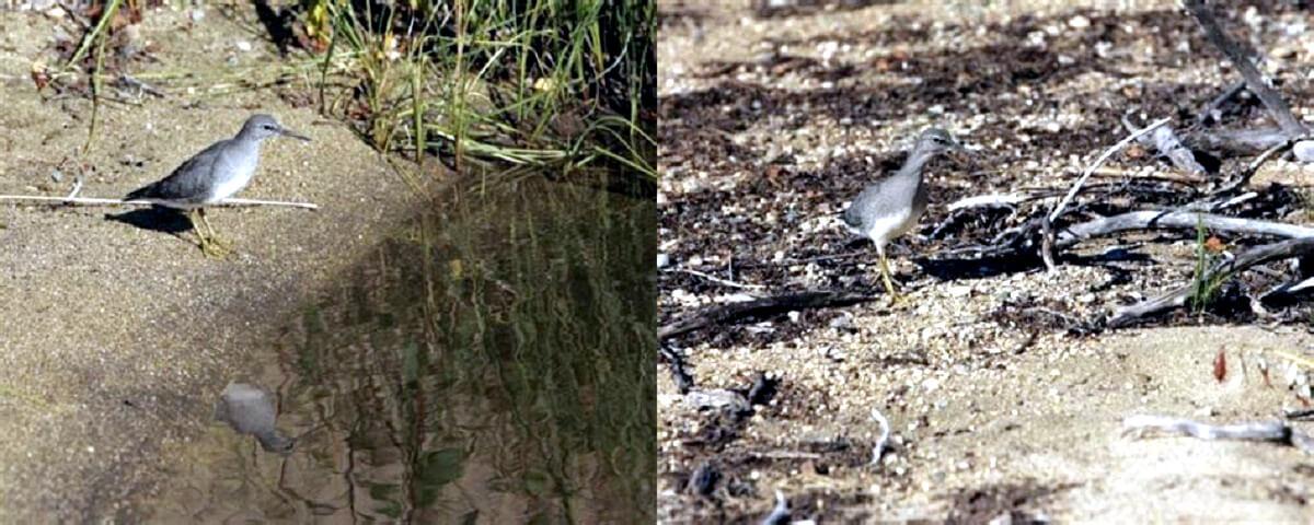 Vogels verhongeren door opgedroogde meren in Turkije