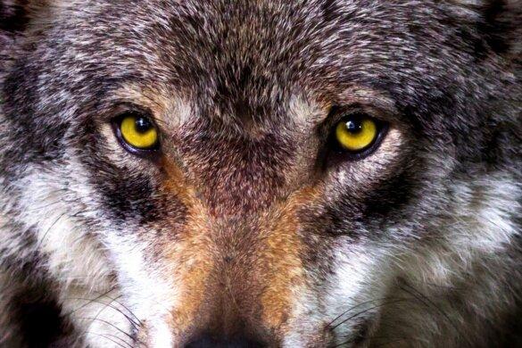 Karen's blog: De logica van jagers