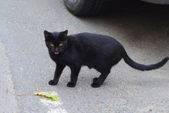 Vrijspraak van doden en mishandelen zeven katten