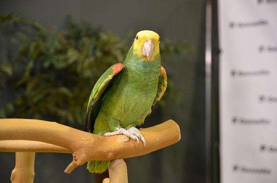 Gestolen vogel