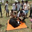 Stropers blazen beer op met bom