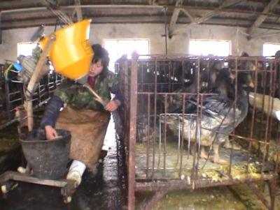 Foie Gras China