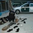 Rechtszaak voor doden 2.200 dieren in Spanje