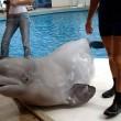 beloega walvis