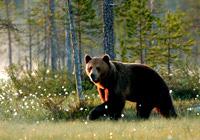 beren op locatie