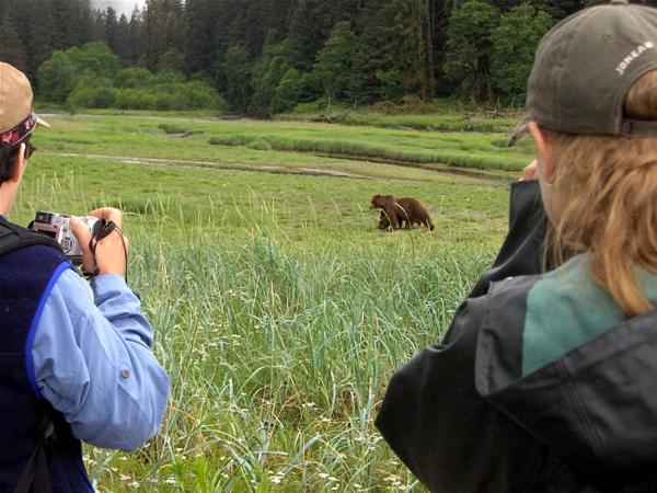 Bruine beer in het wild