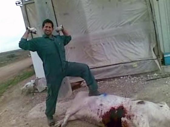 dierenmishandeling