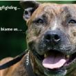 Nieuw leven na hondengevechten
