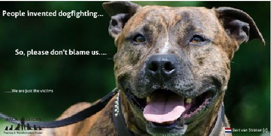 hondengevechten