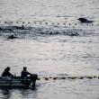 Eerste dolfijnen van het seizoen afgeslacht in Taiji