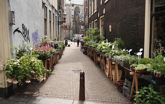 Amsterdam planten