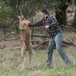 Dierentuinmedewerker stompt kangoeroe in het gezicht (video)