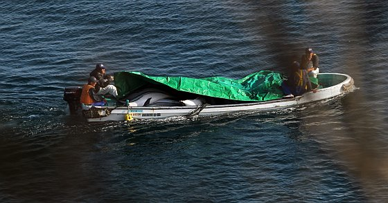 Taiji dode dolfijnen