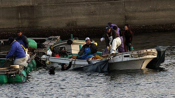 Taiji duikers