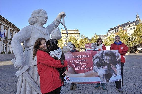Vier Voeters actie Luxemburg