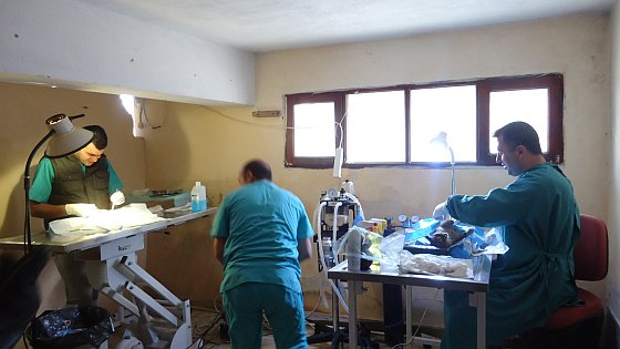 ActieZwerfhonden sterilisatieproject