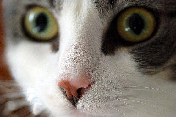 Bange kat - huisdieren