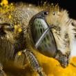 Goede winter maar toestand bijen nog steeds zorgelijk