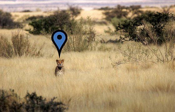 Cheetah gps - drones