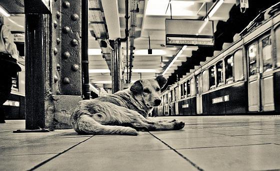 Hond bij metro