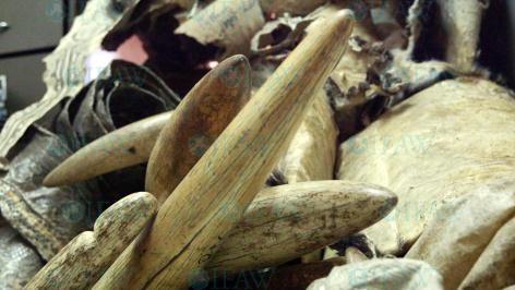 ivoren voorwerpen
