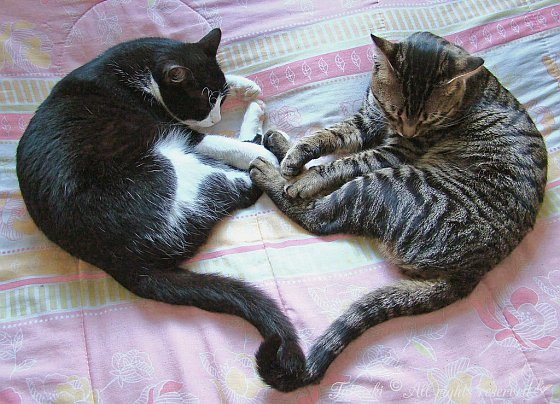 Katten hartje, dating