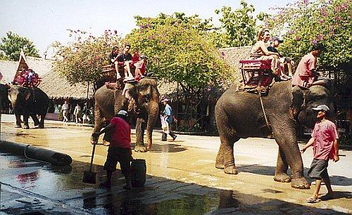 Olifantenritje - Overwerkte olifant