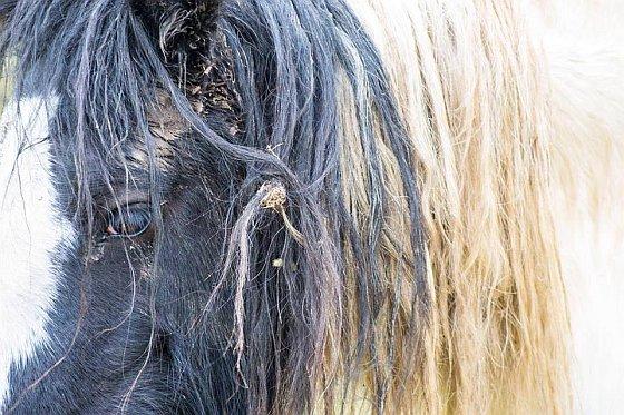 Paard Fosse Park