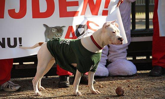 Protest ADC hond dierproefcentrum
