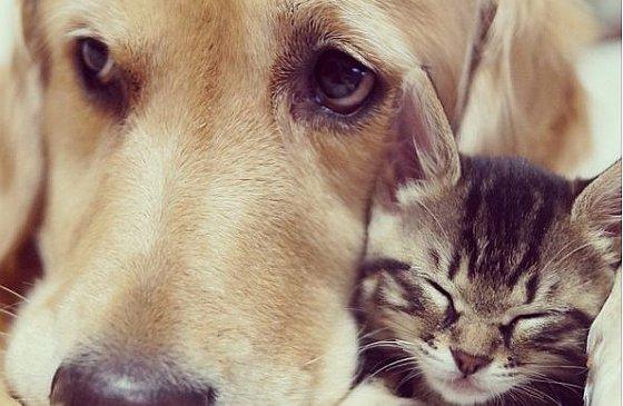 Kitten met Ponzu