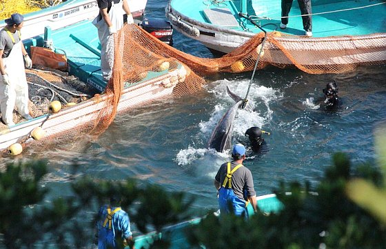 dolfijnenslachtingen