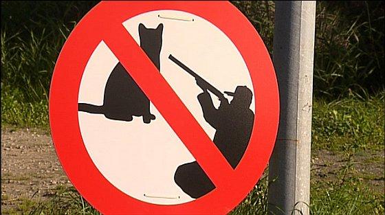 Actie Dierenbescherming zwerfkatten