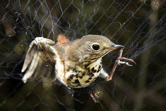 Vogeltje in net - vangnetten