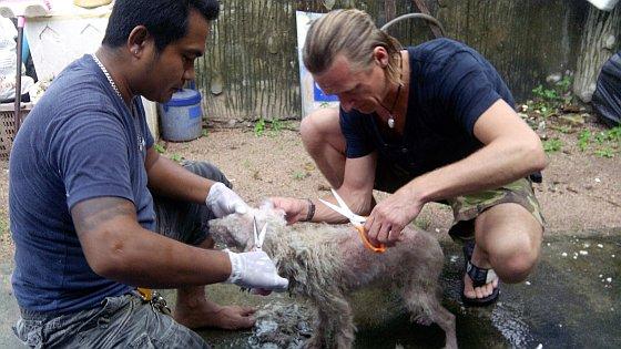 Zieke hond Thailand