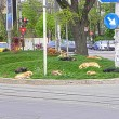 Roemeense straathonden ten dode opgeschreven!? Teken de petitie!
