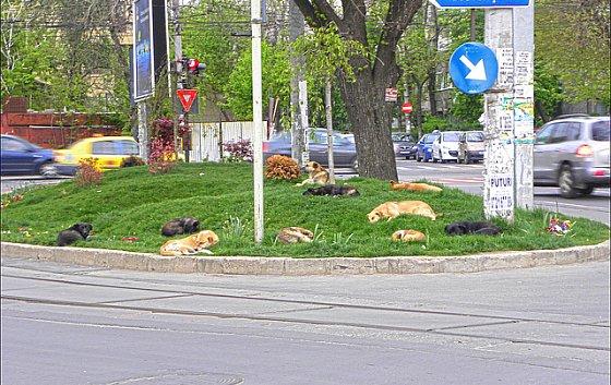 Zwerfhonden Roemenië - straathonden