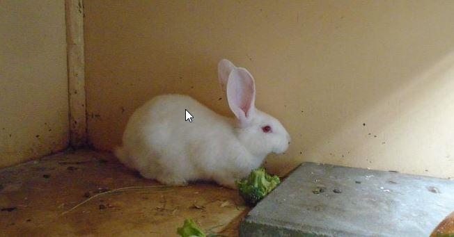 gedumpte konijnen
