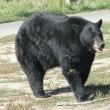 Jacht op zwarte beren New Jersey