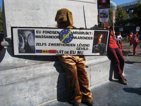 honden Roemenië